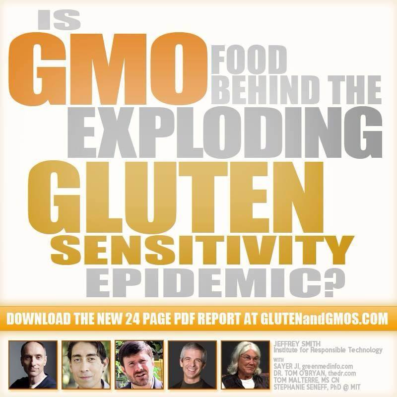 GMOs and the Exploding Gluten Epidemic