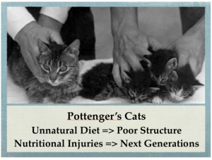 Lessons from Pottengers Cats Children Nutrition