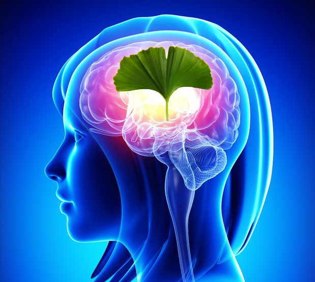 Boost Memory, Regenerate Neurons with Ancient Plant Medicine