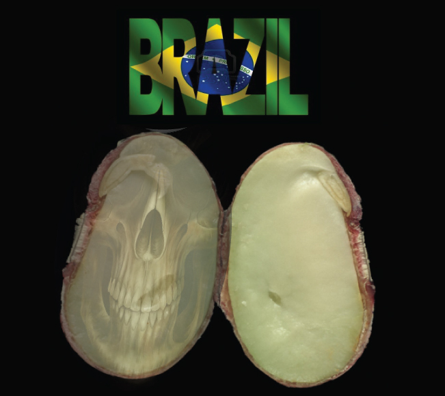 BREAKING NEWS: GMO 'Suicide Seeds' On Edge of Approval in Brazil