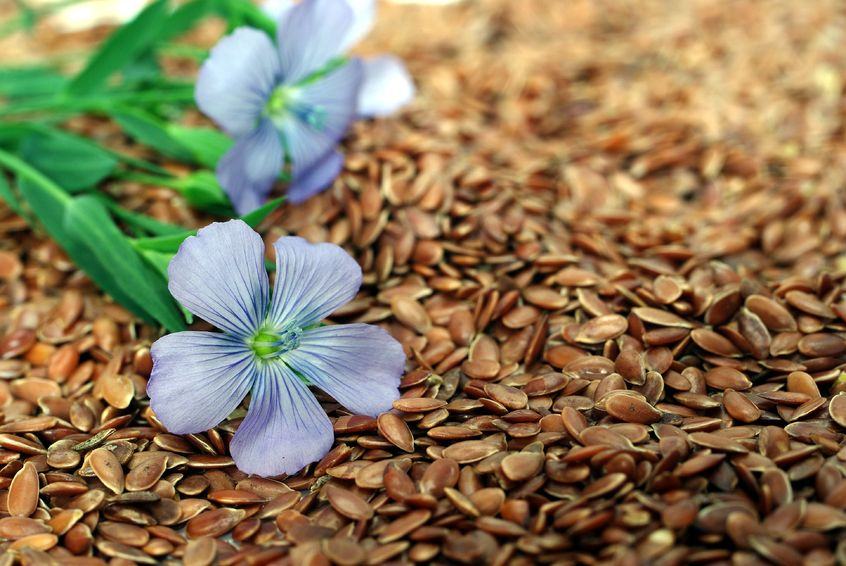Flaxseed Can Prevent And Kill Breast Cancer, Meta-Analysis Reveals