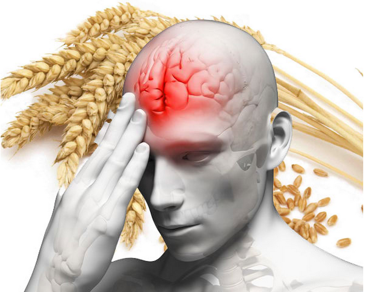 Research: Wheat Cuts Off Blood Flow To the Brain's Frontal Cortex