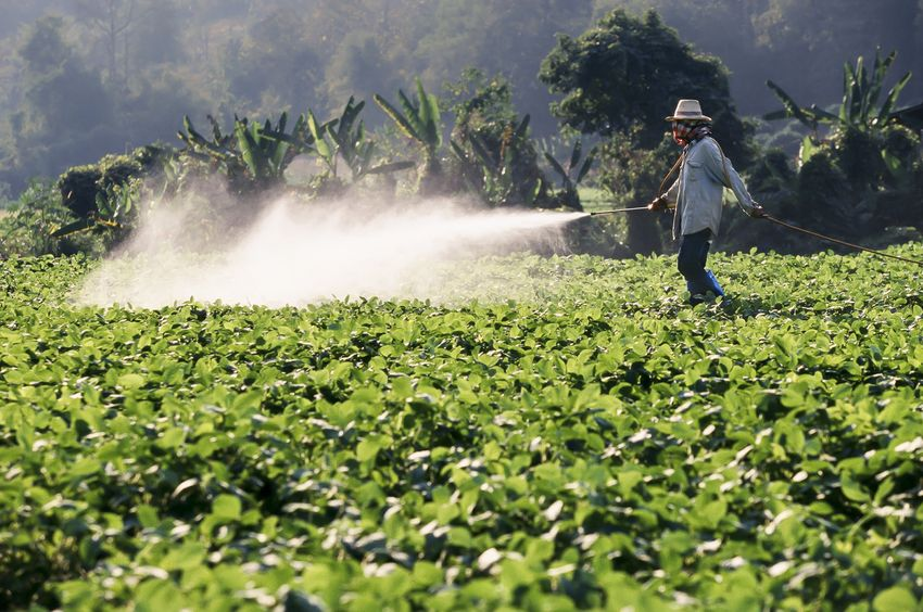Glyphosate (Roundup) Linked To Cancer of the Lymph Tissue In New Study