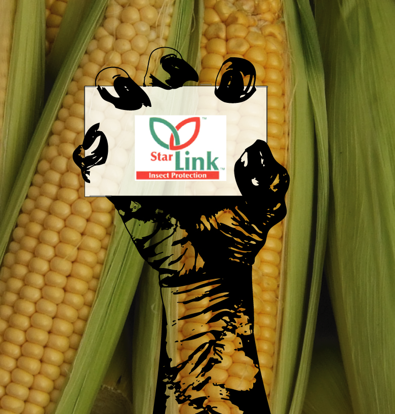 BREAKING: Illegal StarLink™ GM Corn Resurfaces in Saudi Arabian Food Supply