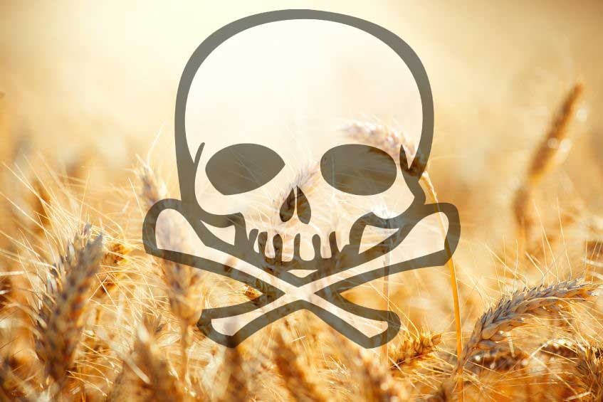A New Reason Why Eating Wheat and GMOs Will Destroy Your Health