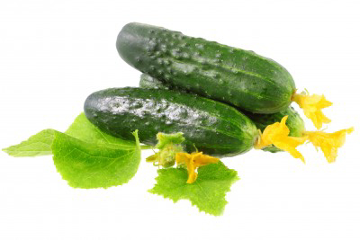 In Praise of the Lowly Cucumber