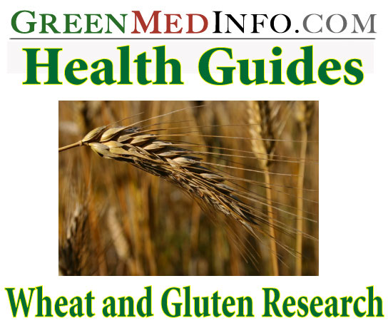 Health Guides: Wheat and Gluten Research