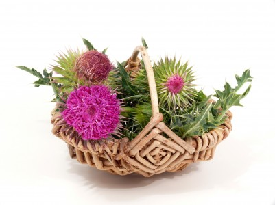 Is Milk Thistle Useful for Viral Hepatitis Or Not?