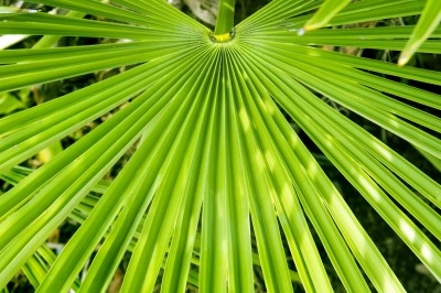 Is Saw Palmetto Effective For Prostate Conditions Or Not?