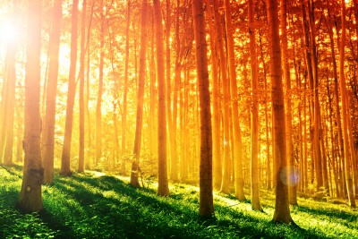 5 Amazing Properties of Sunlight You've Never Heard About