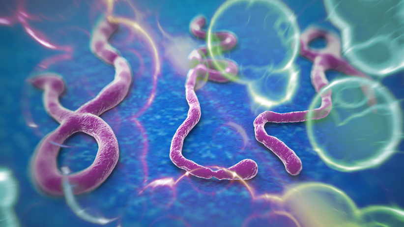 Your Best Strategy in the Face of Ebola