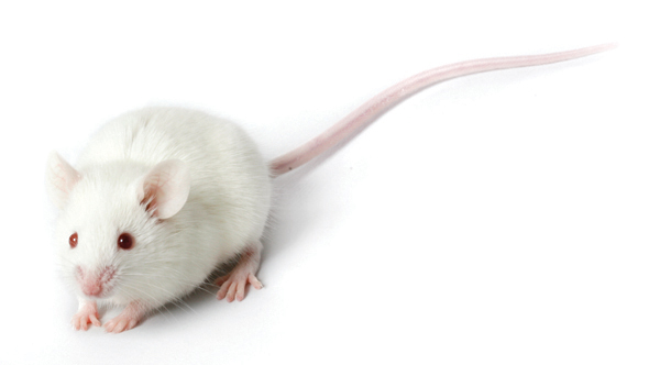 The Failing Animal Research Paradigm for Human Disease
