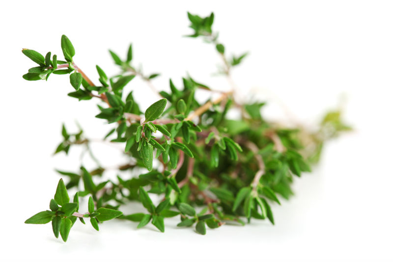 Thyme Oil Beats Ibuprofen for Relieving Menstruation Pain