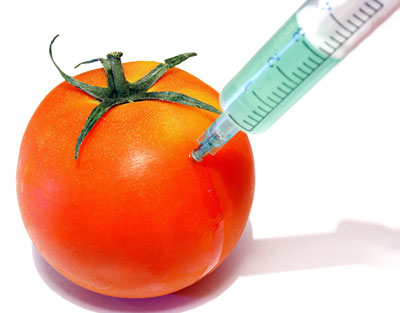 Gmo's and Horizontal Gene Transfer