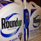 BREAKING: Glyphosate (Roundup) Carcinogenic In the PARTS PER TRILLION Range