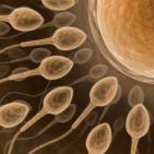 Black Seed Boosts Fertility and Semen Quality in Men