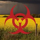 BREAKING: Monsanto/Bayer's GM Plants Contaminate Europe Despite Ban