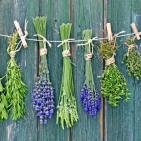 Medicinal Herbs Show Ability to Replace Diabetes Medication without Side Effects
