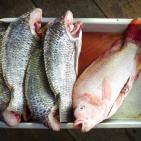 Aluminum Eliminated as a Food Additive for Fish: Norway Codex Update