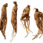 Ginseng Can Help Treat and Prevent Influenza