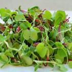 Microgreens: More Nutrition Packed in Baby Lettuce