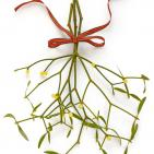 Mistletoe Extract Beats Chemotherapy Against Colon Cancer Cells