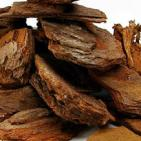 Pine Bark Extract Treats Meniere's Disease
