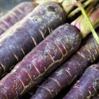 Purple Carrots Boast Ancient Roots