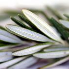 'Rosemary Is For Remembrance' ~ Science Confirms Wisdom of the Ancients