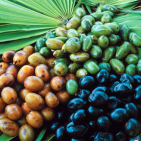 Saw Palmetto: Nature's 'Cure' For Prostate Conditions?