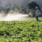 GMO and Monsanto Roundup: Glyphosate Weedkiller in our Food and Water?