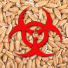 Should Wheat Be Reclassified as a PATHOGEN?