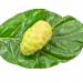 Noni Leaf Extract Superior To Chemotherapy for Lung Cancer (Preclinical Study)