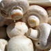 Mushroom Lowers PSA in Prostate Cancer Men