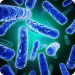 Probiotics Destroy Toxic Chemicals In Our Gut For Us