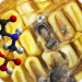 BREAKING: Study Links Roundup 'Weedkiller' To Overgrowth of Deadly Fungal Toxins