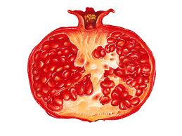 Pomegranate Can Serve As A Backup Ovary