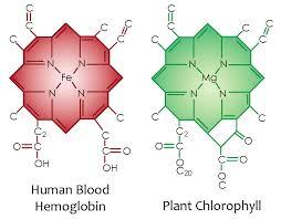 Dieta rica em vegetais verdes permite às suas células captar a Luz Solar