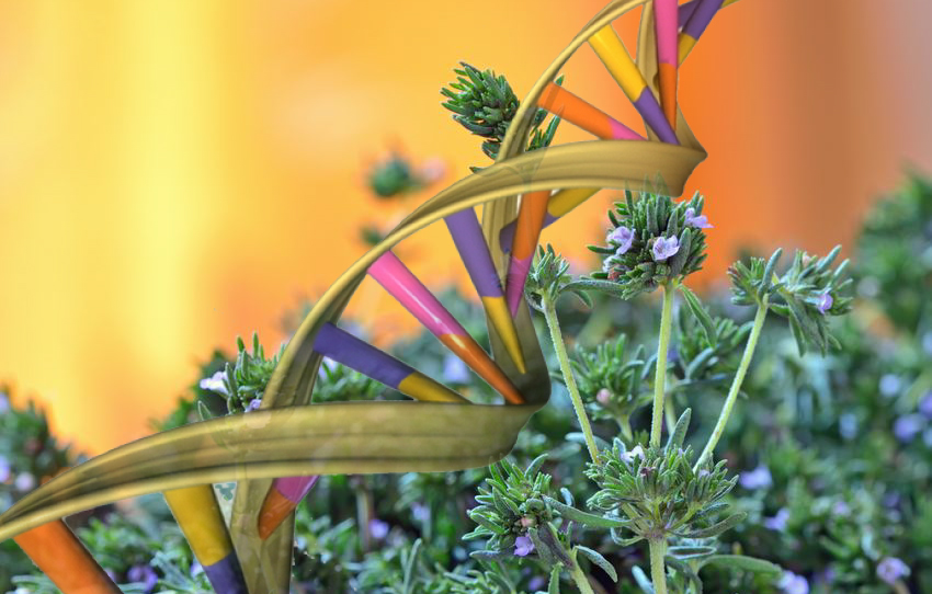 Herbal Medicine Alters Genes, Cell Mitosis and Epigenome